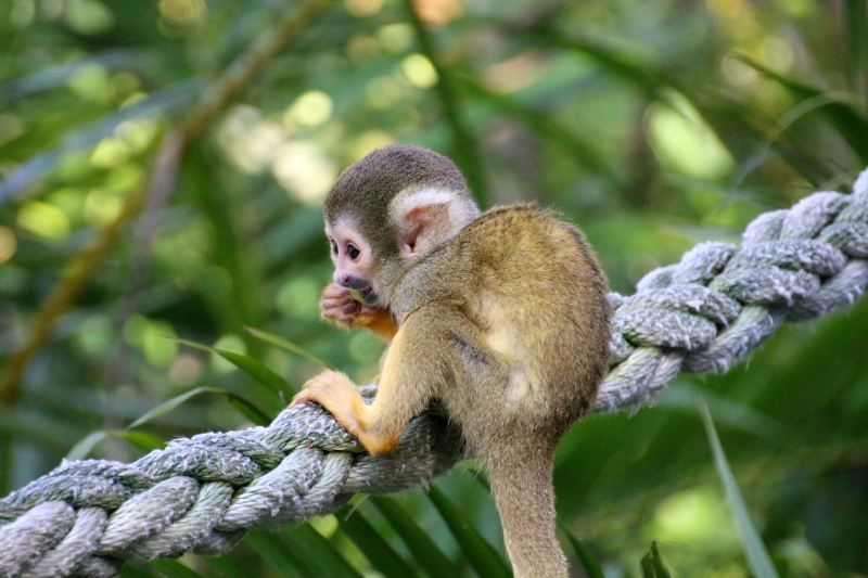 10_Squirrel Monkeys 2_Photo by Paul Fahy