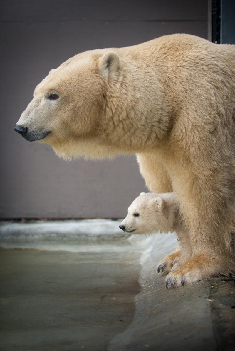 8_Anana's_Polar Bear Cub 7100 - Grahm S. Jones, Columbus Zoo and Aquarium