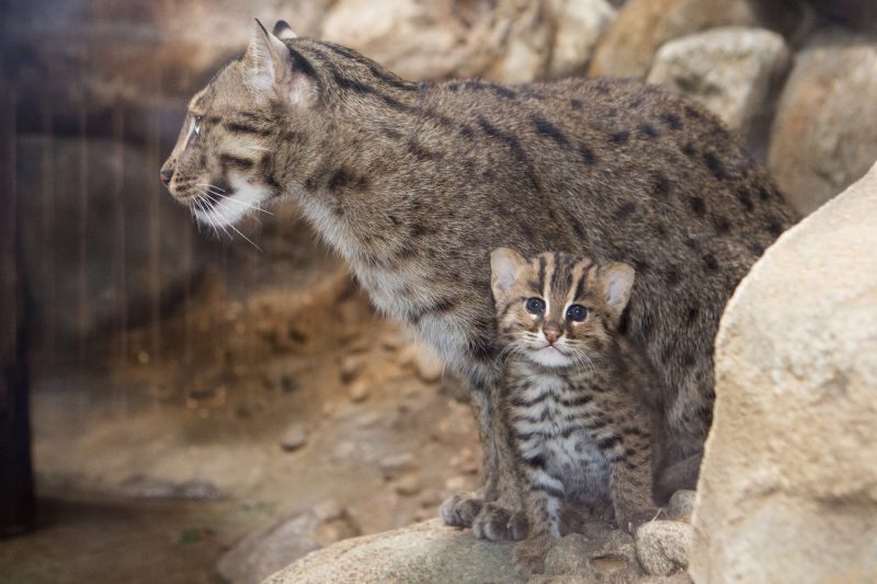 Chat Cat Fishing