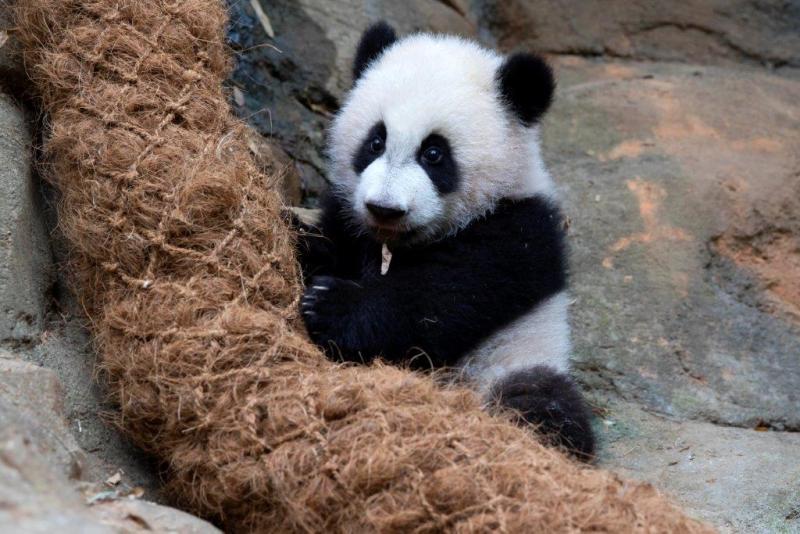 2_Ya Lun_Zoo Atlanta