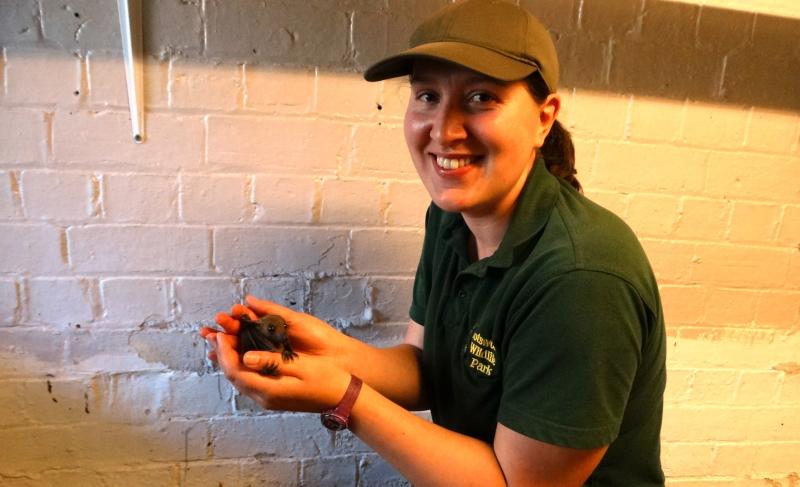 5_Natalie Horner holding Bat babies for last time before reintroduction (3)