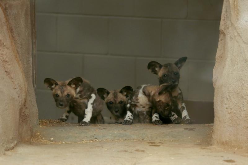 1_AWD Puppies_Jan 18_1