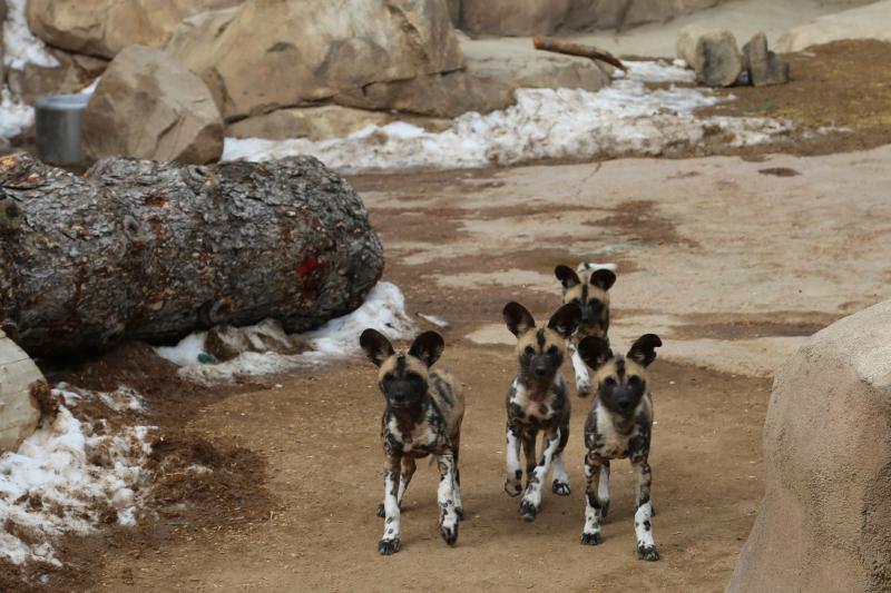 5_AWD Puppies_Feb 14_1
