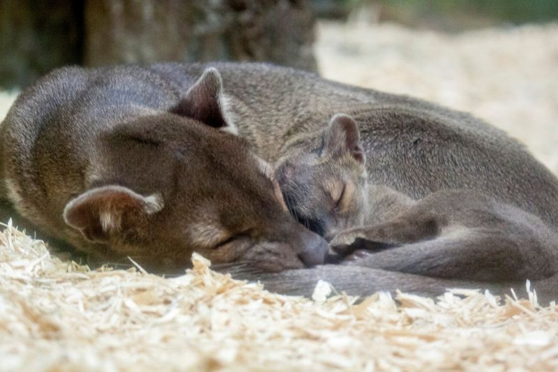 Fossa and mom
