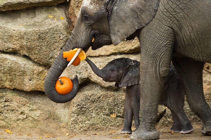 Elephants_Zoo Vienna