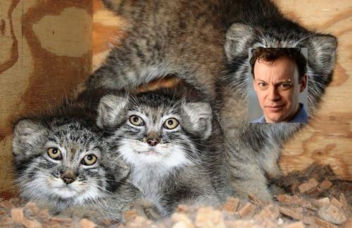 Pallas Cat Trumbull
