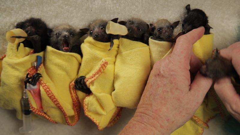 Bat row 4