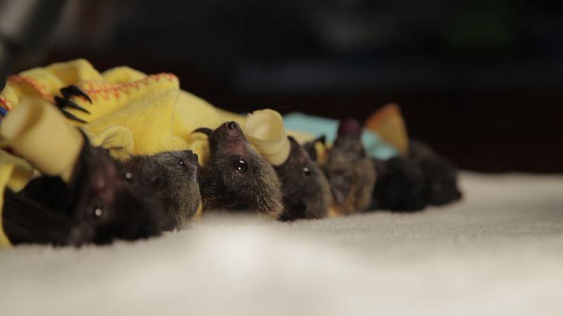 Low angle row bats