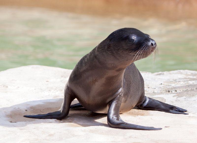 3 seal