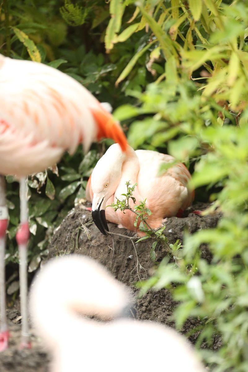 8_Lincoln Park flamingo_7