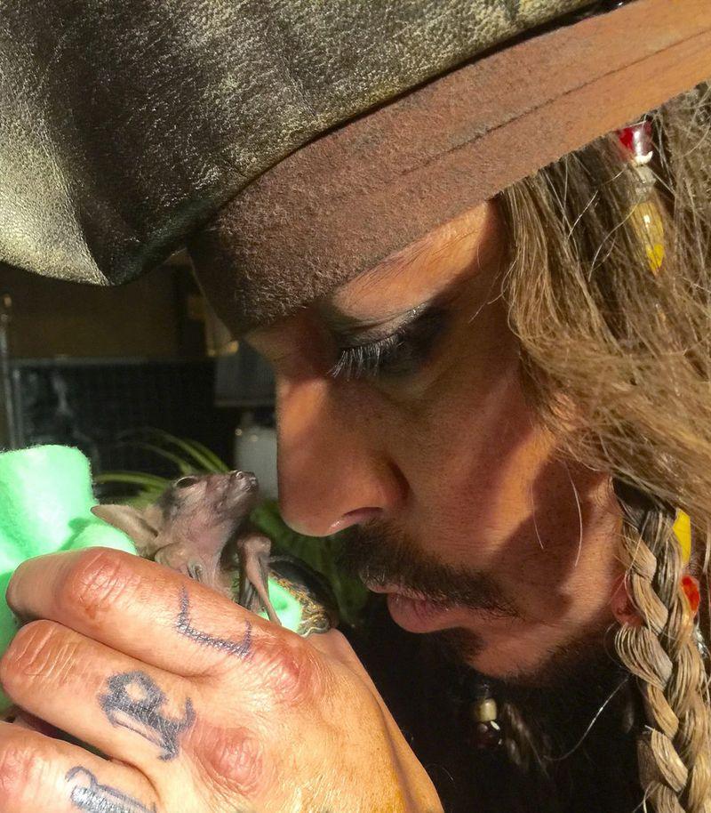 Jack Sparrow Meets Jackie Sparrow, An Orphaned Bat