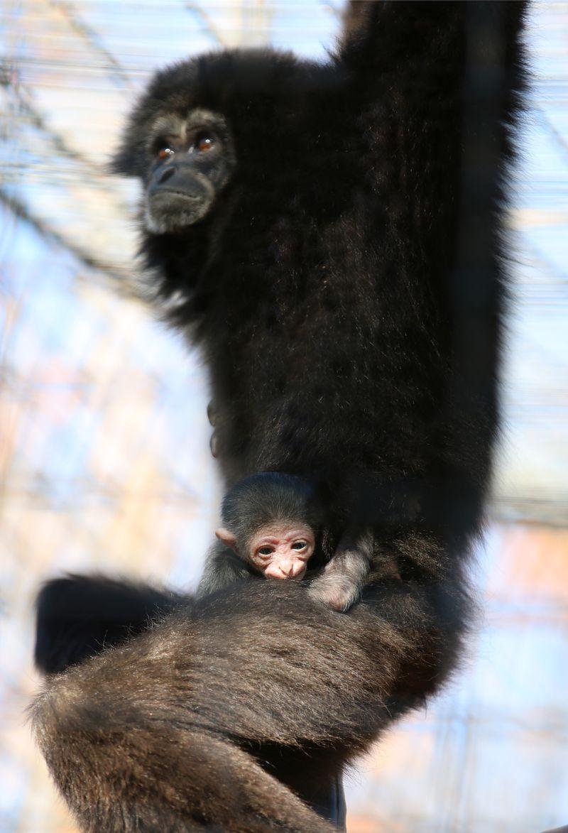 Koko and baby-Carla Knapp