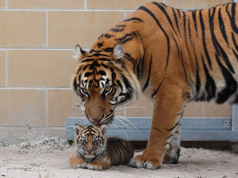 1_Lucy and her cub