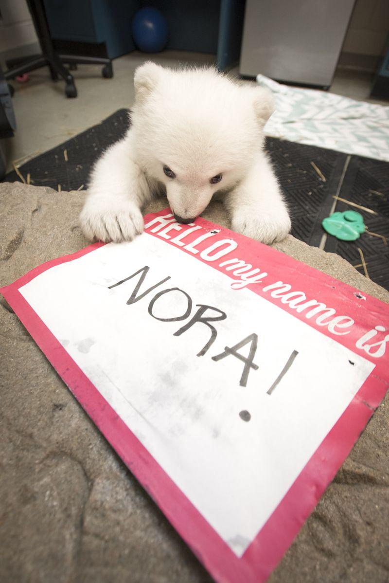 Polar Bear Cub 9246 - Grahm S. Jones, Columbus Zoo and Aquarium