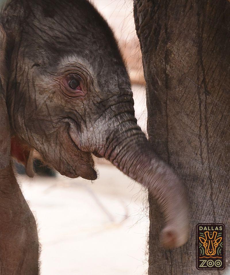 Elephant calf May17_2016 LH6 logo