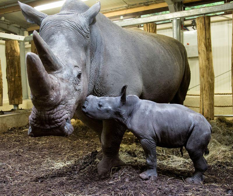 Rhino7 copy