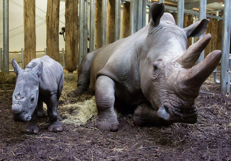 Rhino8 copy