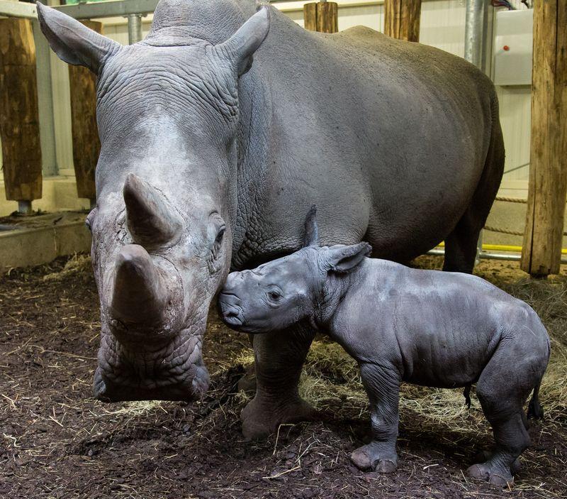 Rhino9 copy