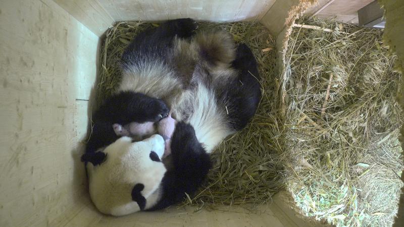 2_Pandazwillinge 22_August 4
