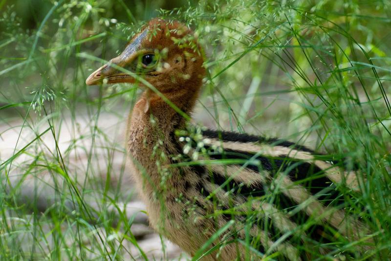 8_no.9-chick
