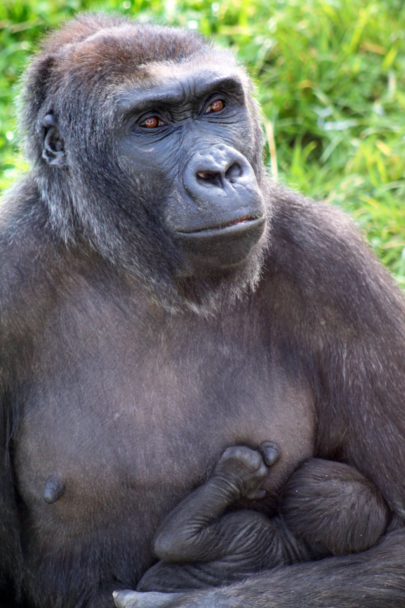 (2)  The latest arrival was born to mother, Namoki, and father, Gugas, on 28 August 2016.