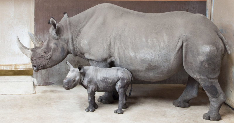 2_GPZ_Imara and Baby Boy Rhino_2016_fb