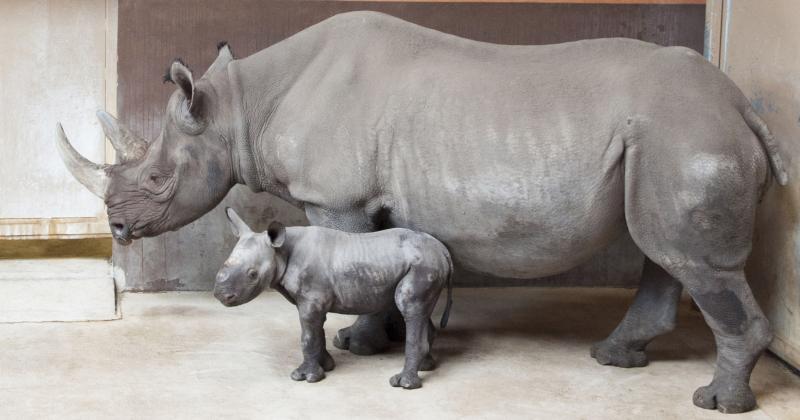 2_GPZ_Imara and Baby Boy Rhino_2016_fb