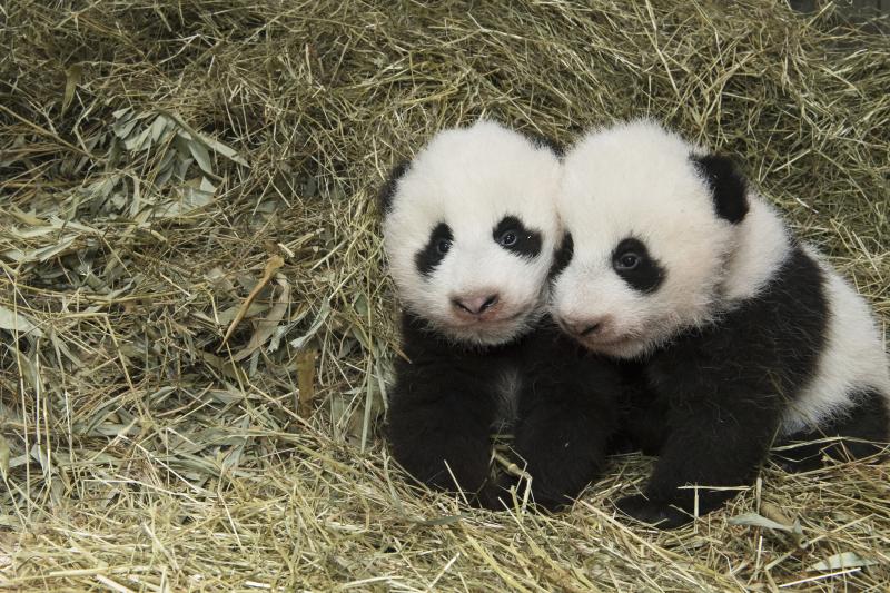 4_Pandas_TGS_Zupanc_31