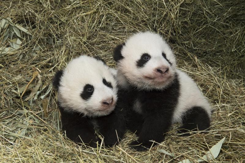 5_Pandas_TGS_Zupanc_36