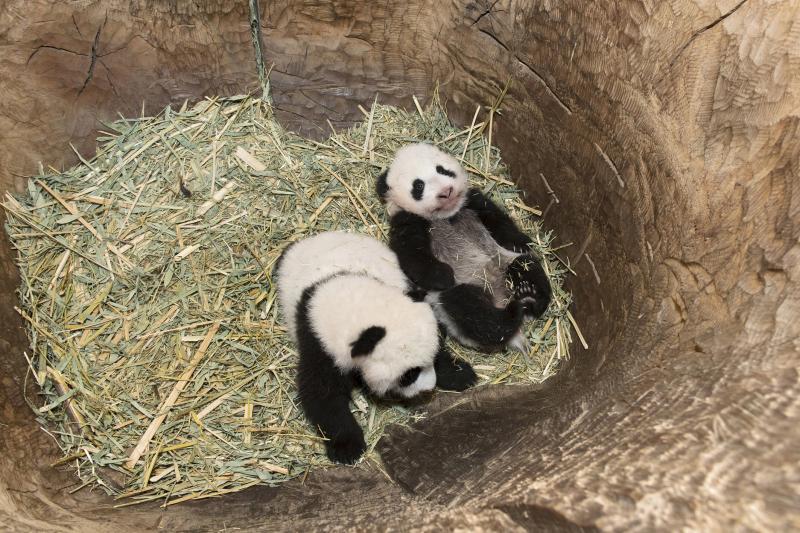 10_Pandas_TGS_Zupanc_01