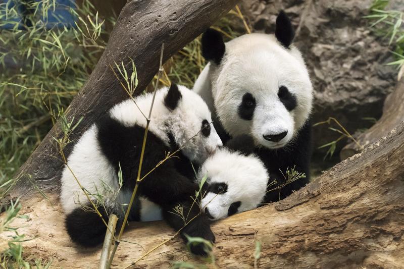 1_Pandas_TGS_Zupanc_03