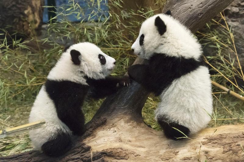5_Pandas_TGS_Zupanc_06