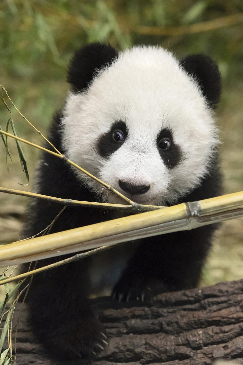 6_Pandas_TGS_Zupanc_02
