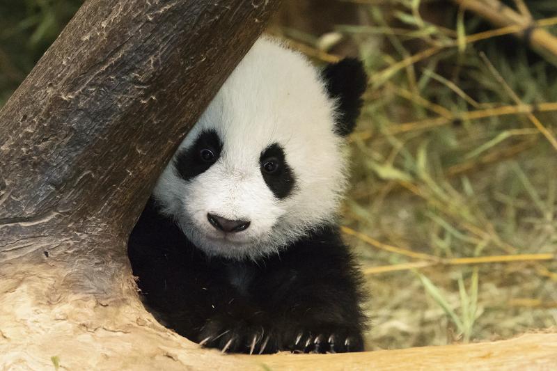 7_Pandas_TGS_Zupanc_11