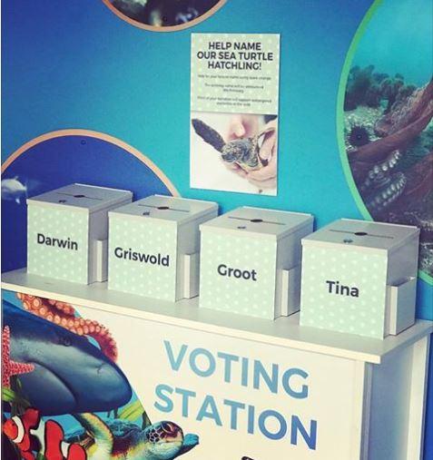 Voting-station