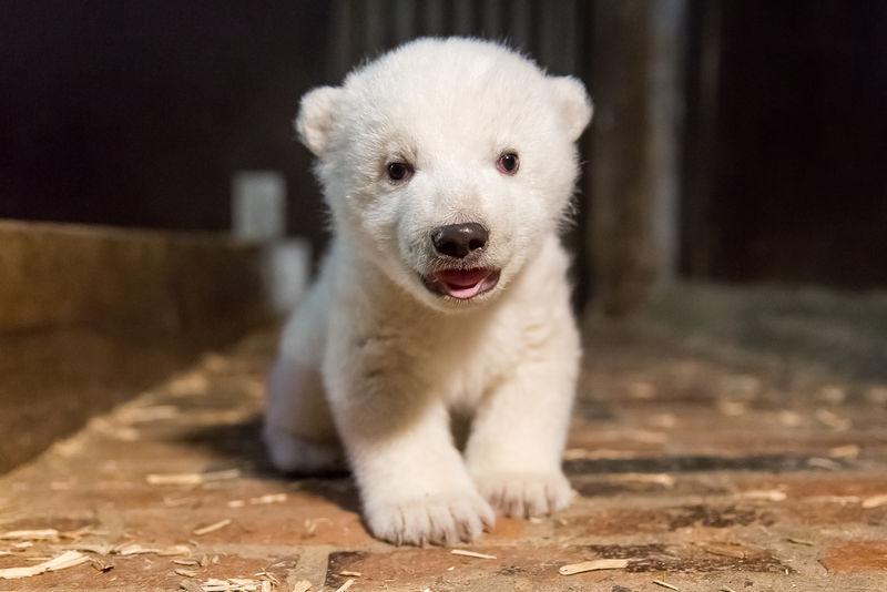 1_csm_ErsteUntersuchung_Eisbaerjungtier_TierparkBerlin2017__4__a68b05a249