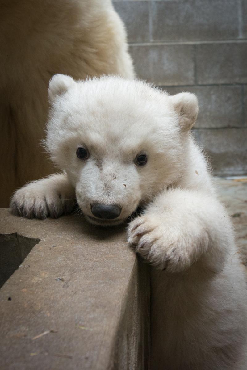 6_Anana's_Polar Bear Cub 5476 - Grahm S. Jones, Columbus Zoo and Aquarium