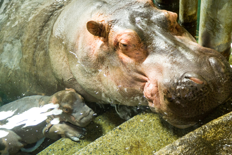 Granby zoo coupons discounts