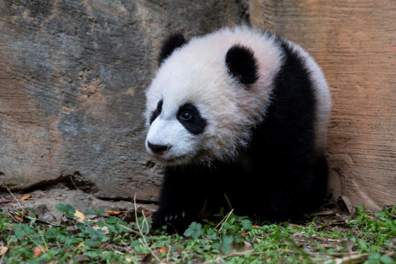 3_Xi Lun_Zoo Atlanta