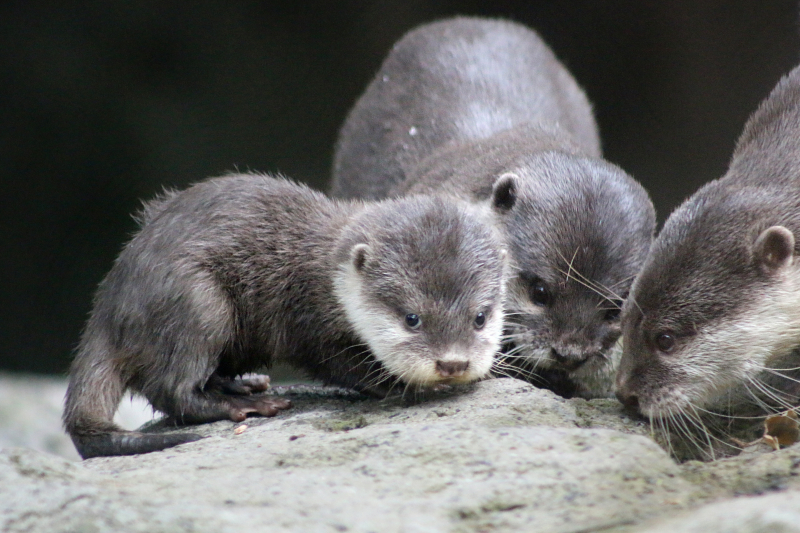 Otter Pup 7_Photo by Paul Fahy