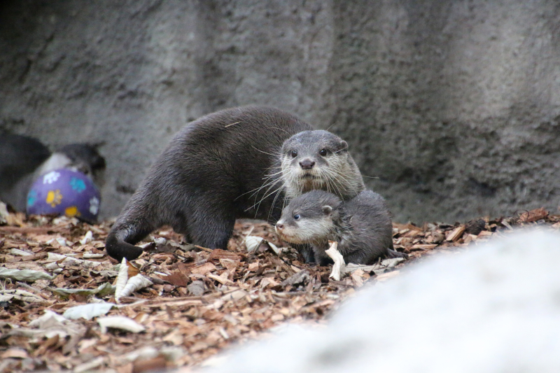 Otter Pup 13_Photo by Paul Fahy