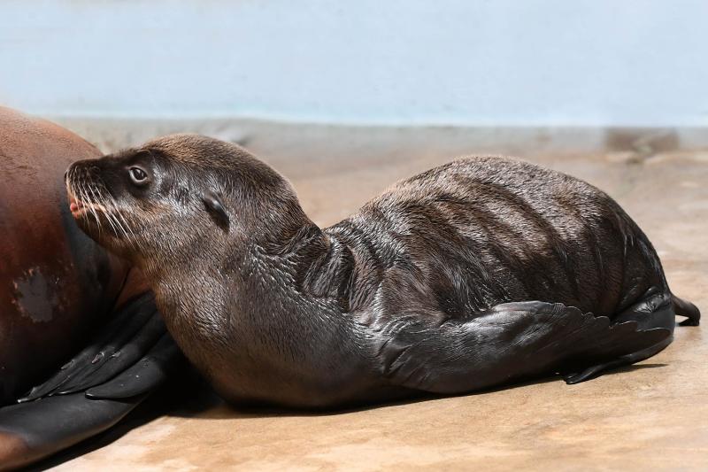 9_Brookfield Sea Lion 8