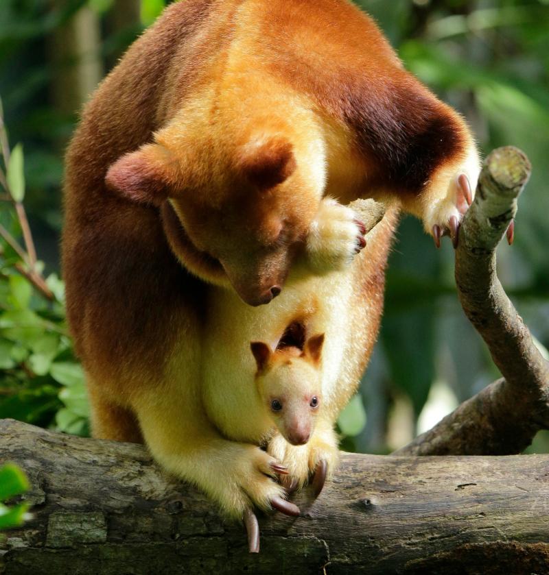Image 1 - SZ Tree roo baby_WRS copy