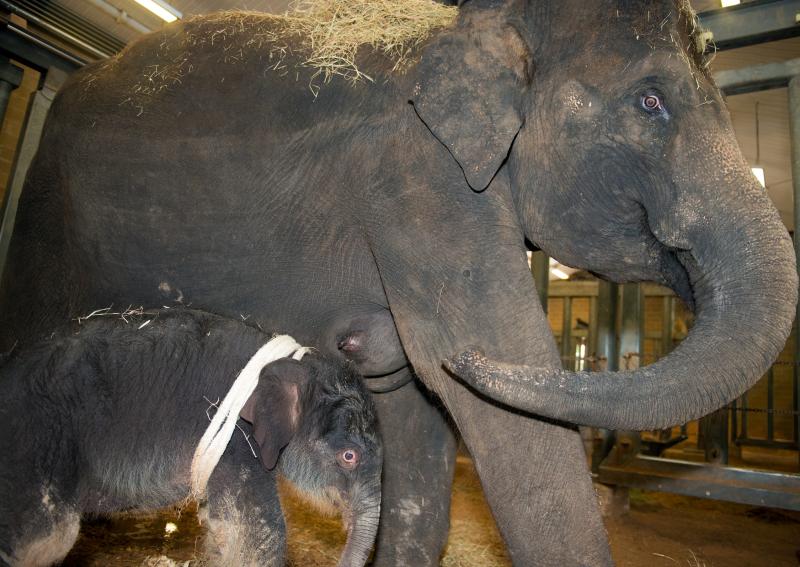 11_Baby Elephant Joy-0006-6395