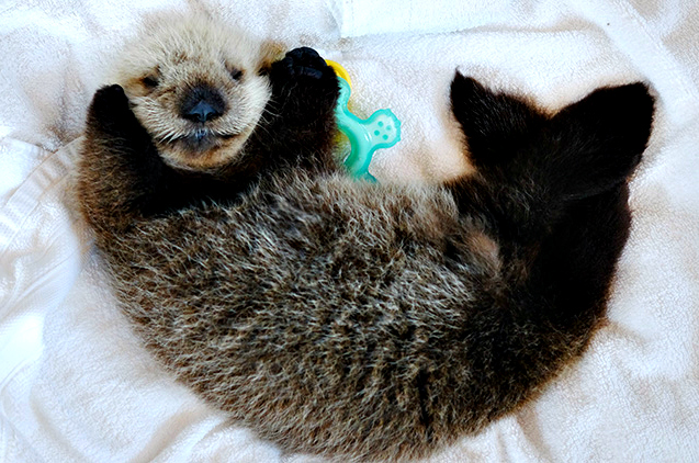 2017-07-11---Baby-Otter-Hardy-MMR---Meighan-Makarchuk-101