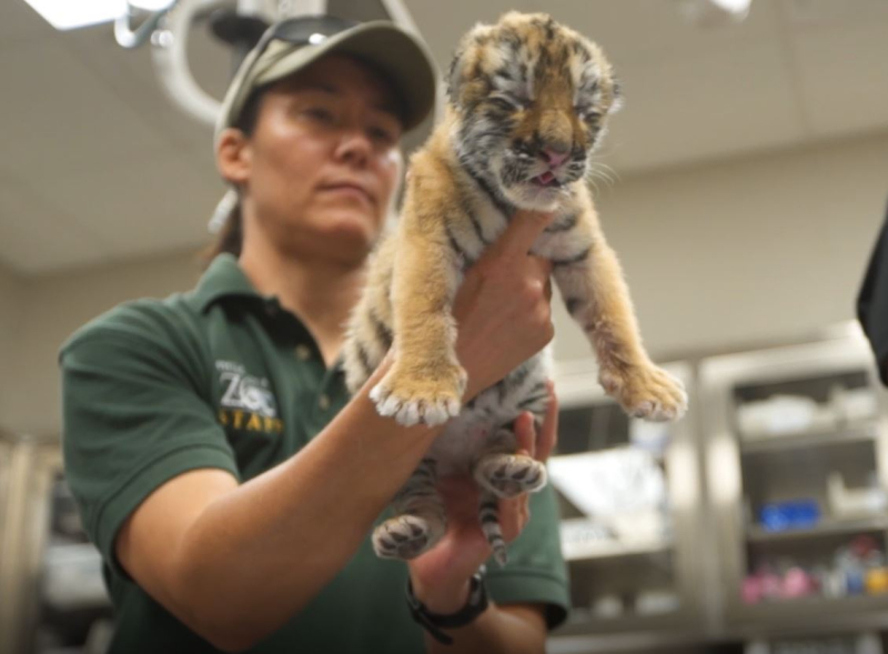 2_Zoya examined at OKC Zoo