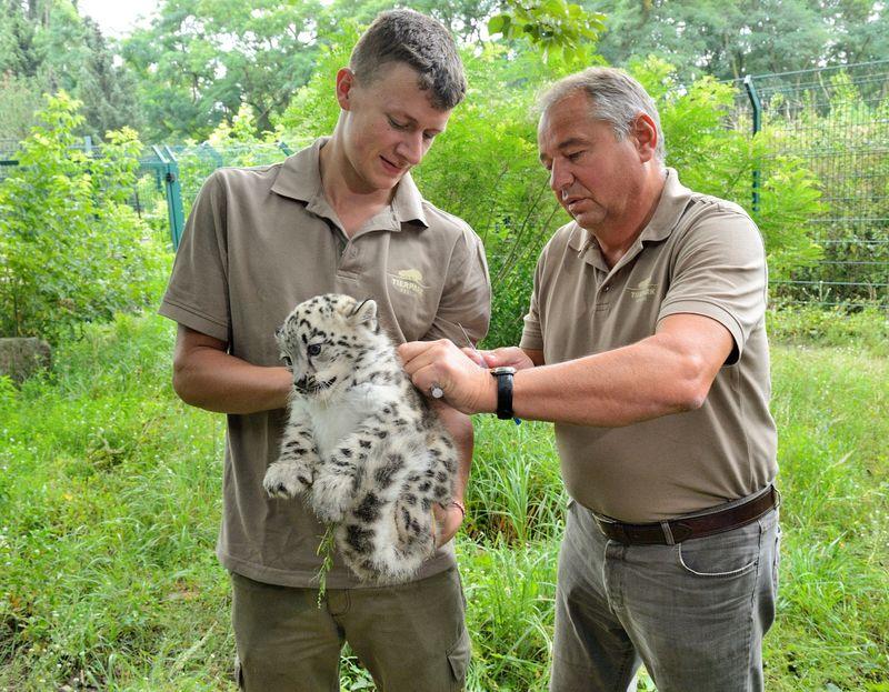 Csm_JimLeeSchmitt_DrGuenterStrauss_ImpfungSchneeleopard_TierparkBerlin2017_5adc243682