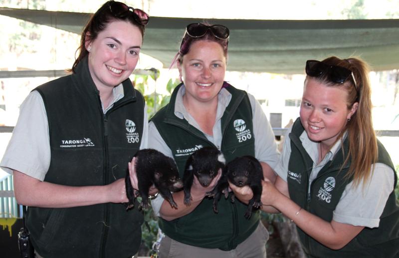 3 - TWPZ Keepers Hayley Brooks  Karen James and Rachel Schildkraut with Tasmanian Devil Joeys