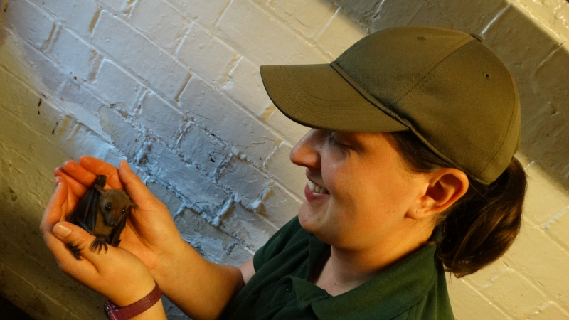 6_Natalie Horner holding Bat babies for last time before reintroduction (4)