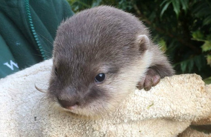 Otter-pup-3_2-1